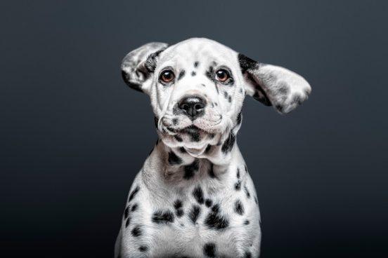 Santos Roman fotografia de perros y gatos